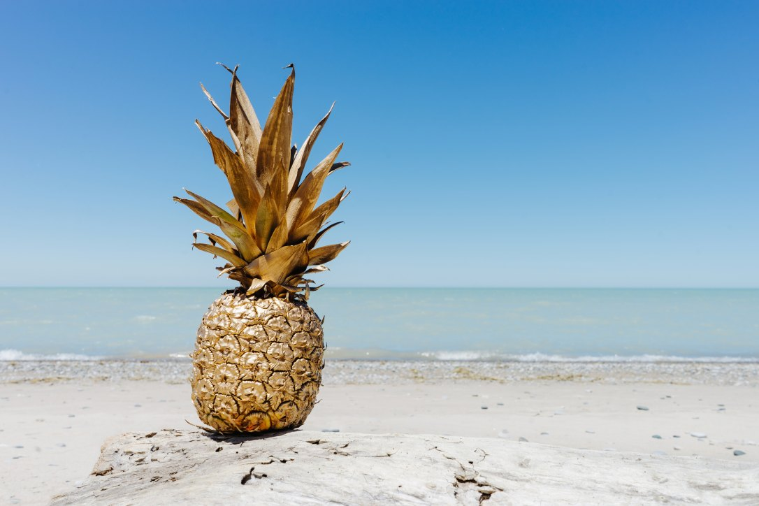 pineapple-supply-co-244487